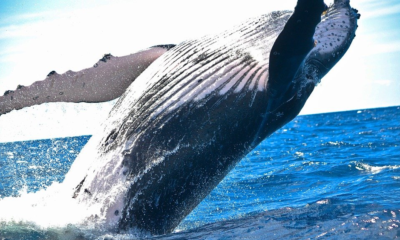 Everything You Ever Wanted to Know About Bitcoin Whales